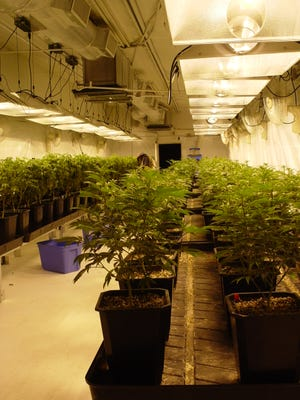 Each grow room provides all the light and air needed to support a large number of plants used dried or as components of edibles.