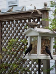 Permanent feeders become well known to local birds
