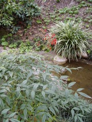 The way the nandina holds its foliage allows it to add grace to water features.