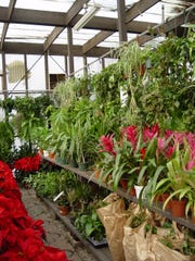 House plants sold at Mollers Garden Center show the