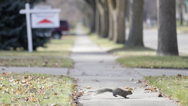 A squirrel runs across the sidewalk adjacent to a home for sale in Green Bay.