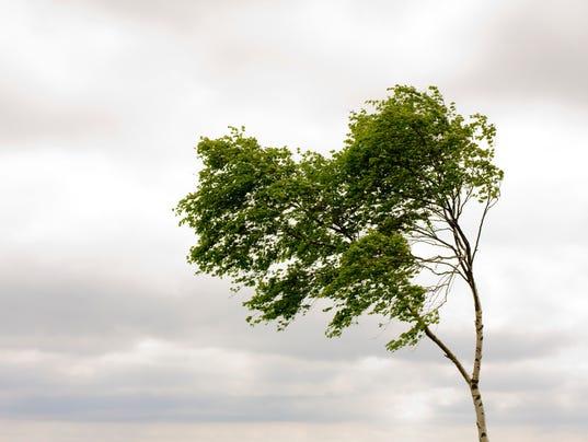 Tree in wind