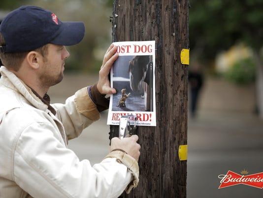 635562250723129937-Budweiser---Lost-Dog---Hero-Image---2015.1.6
