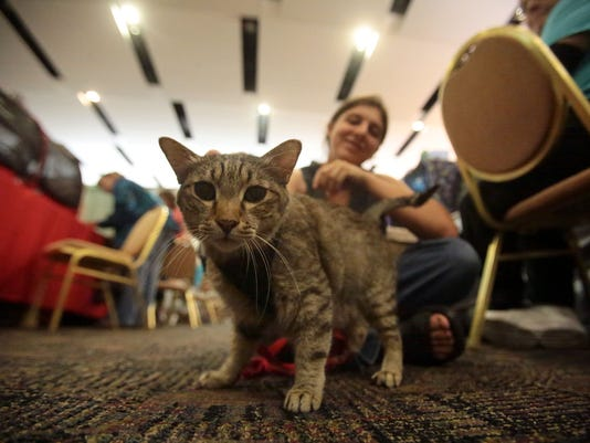 Valley Empire Cat Club and Cat Fanciers' Association Cat Show , Cats, show, Palm SPrings convention Center