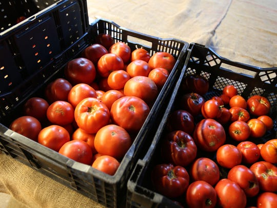 Tomatoes sit in bins at the Cropsey Community Farm in New City, Aug. 21, 2015.