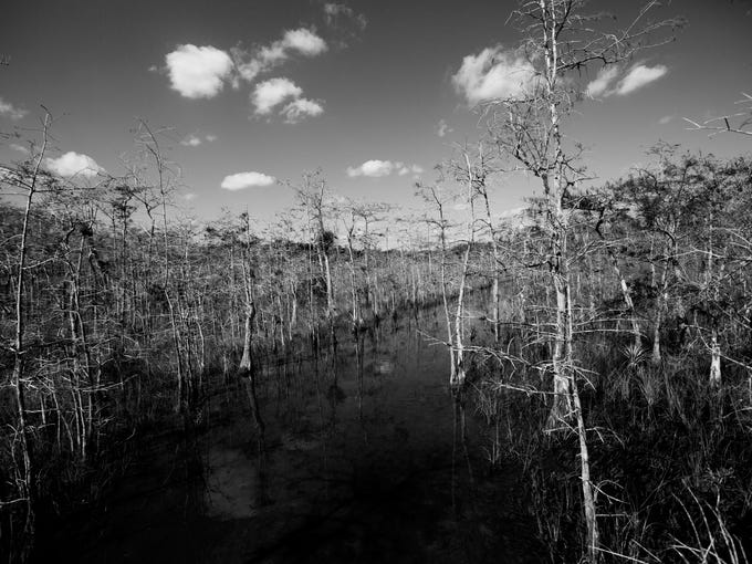 Outtakes from Big Cypress National Park while working