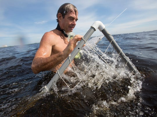 Mark Thompson, a research associate for the Sanibel Captiva Conservation Foundation uses a pvc grid to document shoal grasses in the Caloosahatchee River.