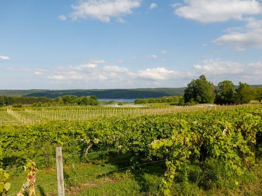 635815386369466424-grape-vines-MW