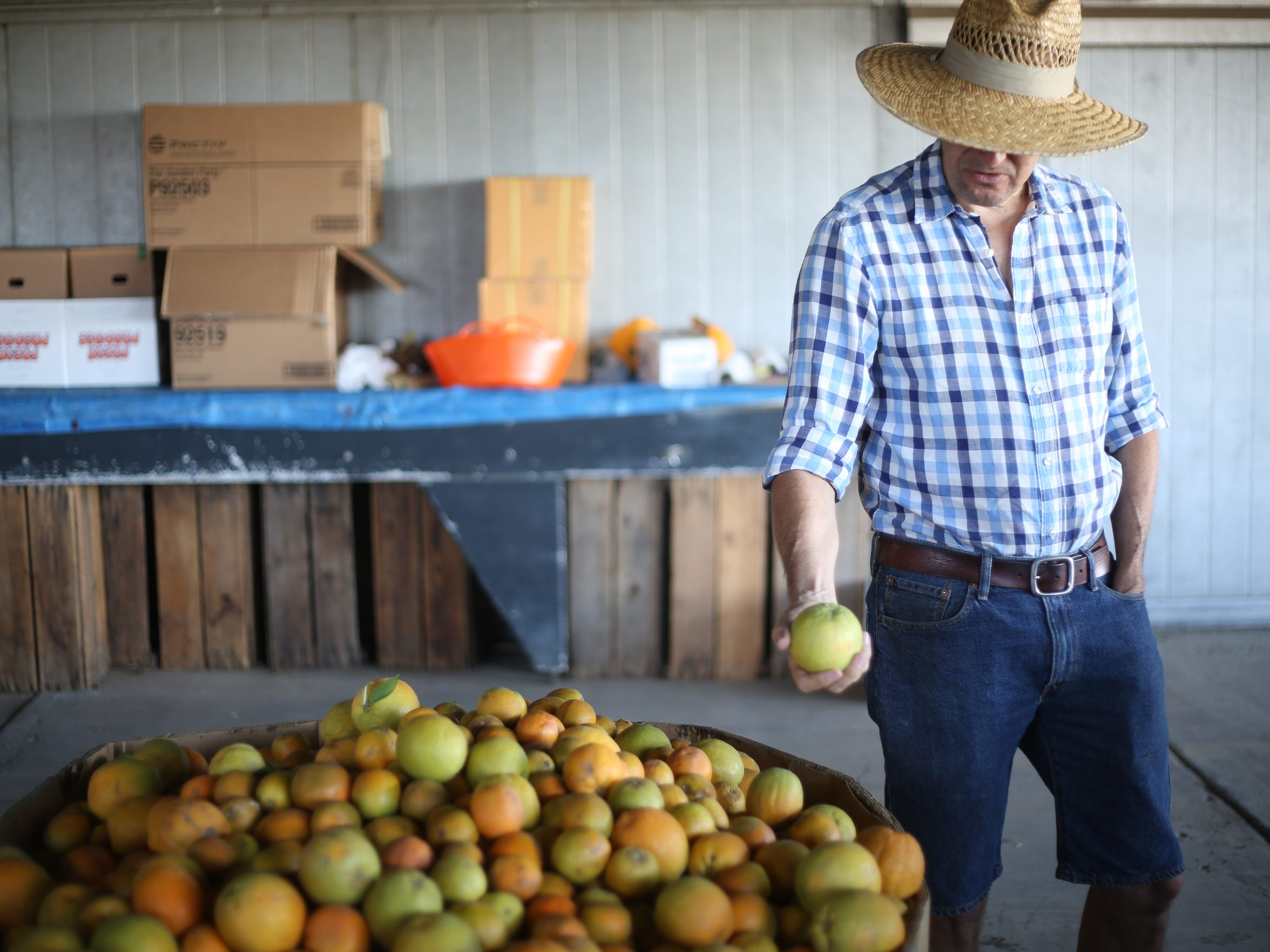 Bob Knight, founder of Old Grove Orange, a farming alliance of 28 local farmers who sell directly to consumers, inspects an orange at his farm in Redlands.