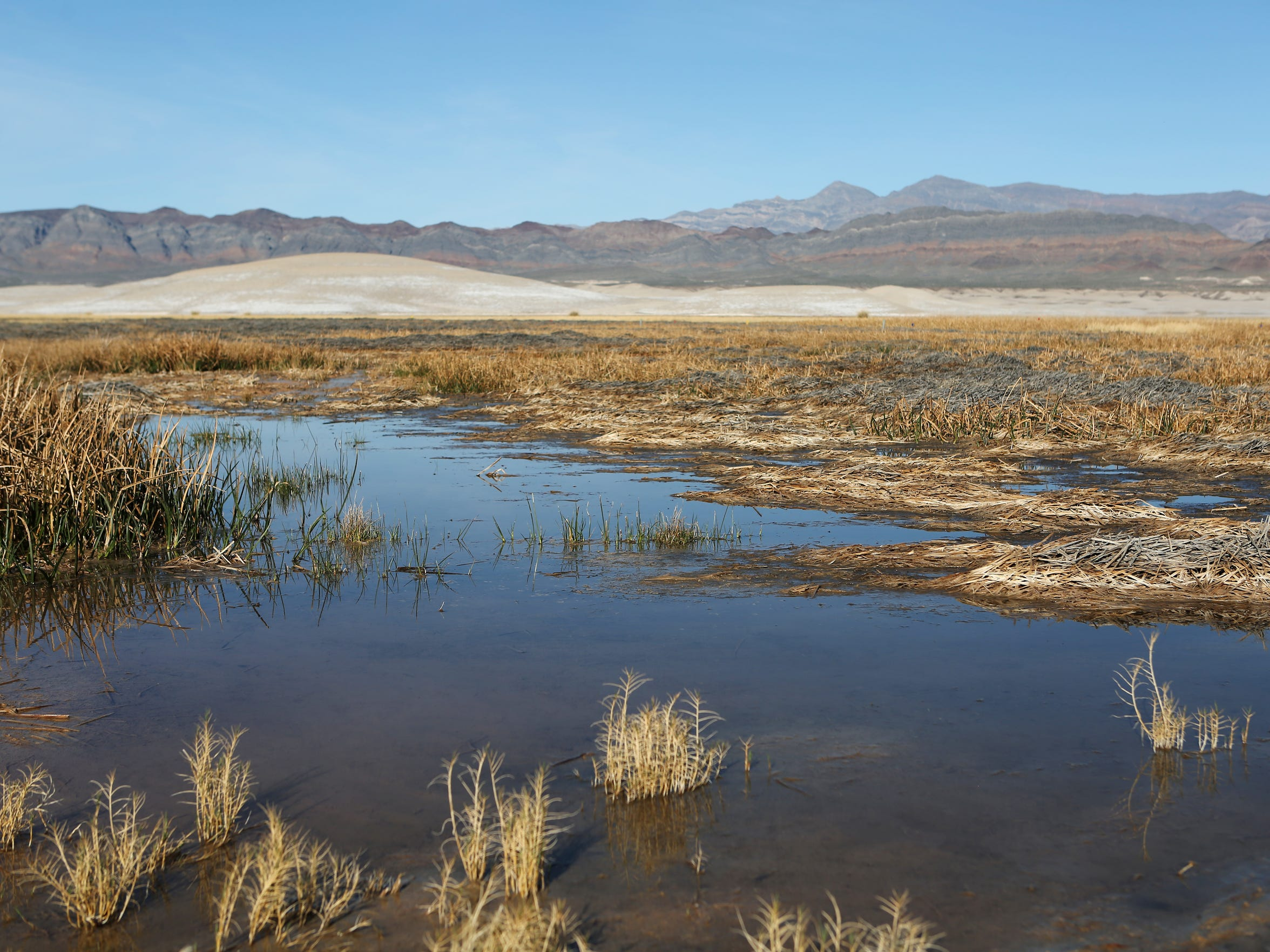 The heart of the Amargosa voles' desert habitat lies