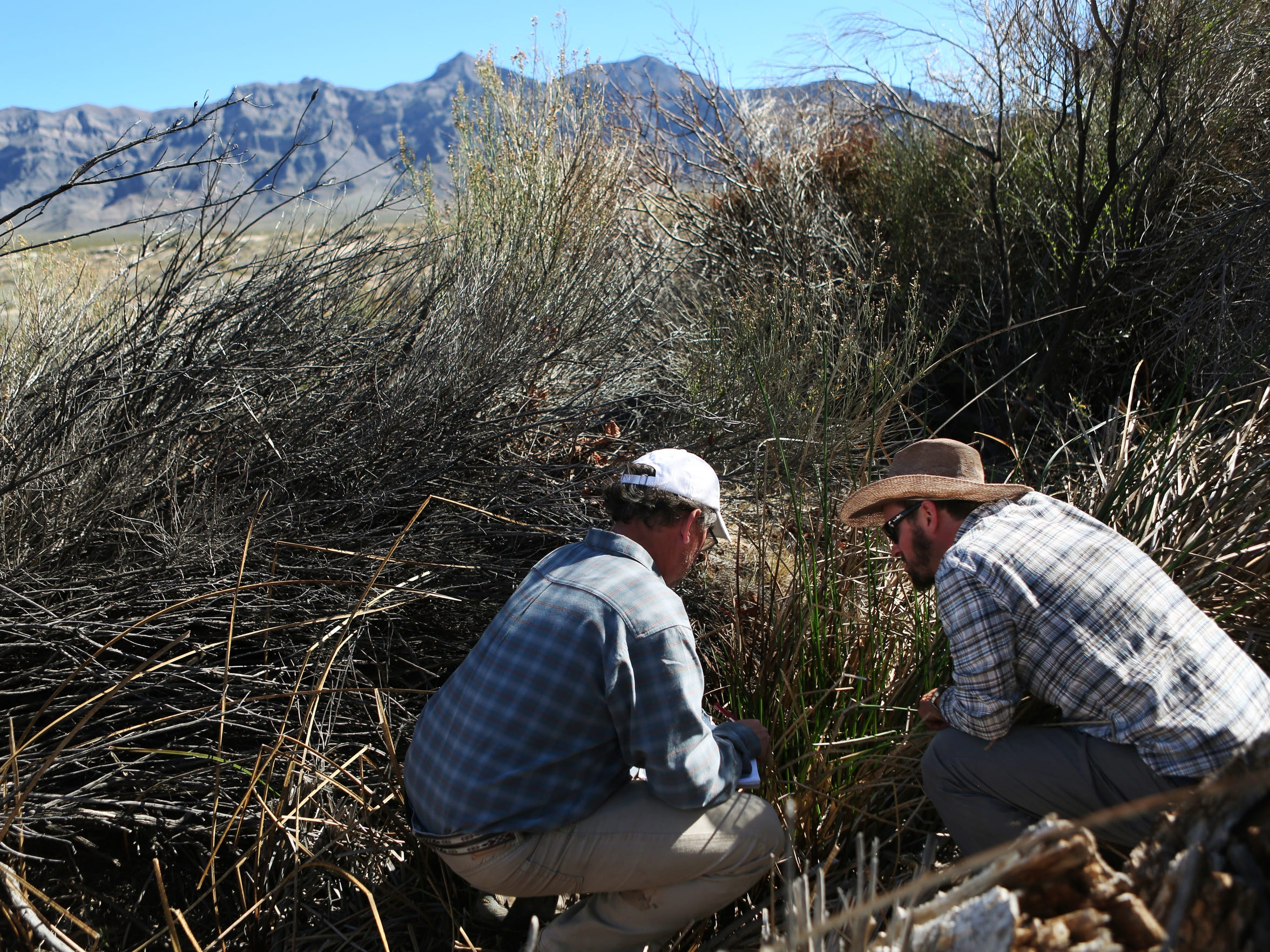 Hydrogeologist Andy Zdon (left) and Amargosa Conservancy Executive Director Patrick Donnelly measure the water flow and collect other data at a spring in the Mojave Desert.