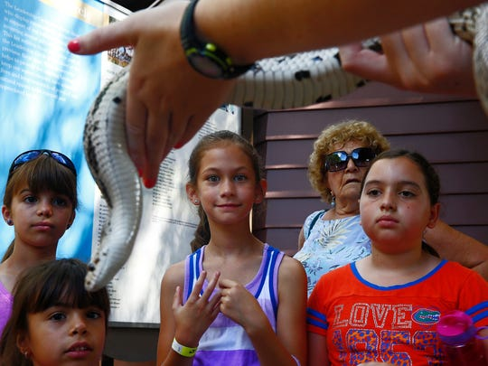 Kate Spivey, 9, from left, Sophia Spivey, 4, Beverly Sherman of Bonita Springs and Ella Johnson, 9, look on to a Florida pine snake, held by Naturalist Kate Davis Saturday, June 4, 2016 at the Conservancy of Southwest Florida in Naples. Droves came out supporting the first Wildlife Hospital Baby Shower. Visitors donated supplies, to help ensure the hospital's youngest patients with the best possible care. Patrons watched young mammals being fed, perused the facility and listened to a lecture on reptiles. (Corey Perrine/Staff)