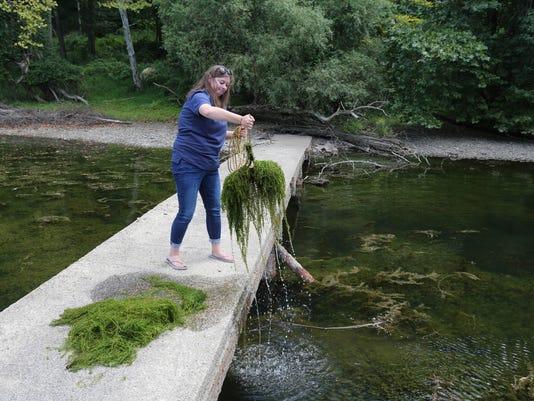 hydrilla black rock park croton