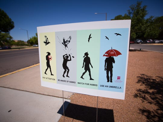 A sign on Williams Avenue on the NMSU campus that warns of hawk attack, Friday, August 19, 2016.