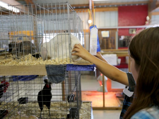 """Rabbits are among the many animals featured at the Manitowoc County Fair, which runs through Sunday at the Manitowoc County Expo grounds. The fair's theme is """"Blue Jeans n' Country Dreams."""""""