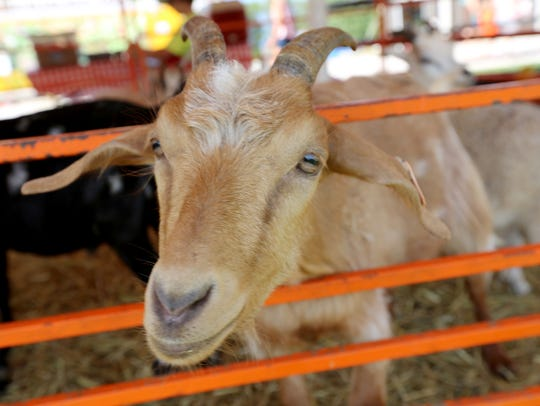 Goats are among the many animal attractions at this