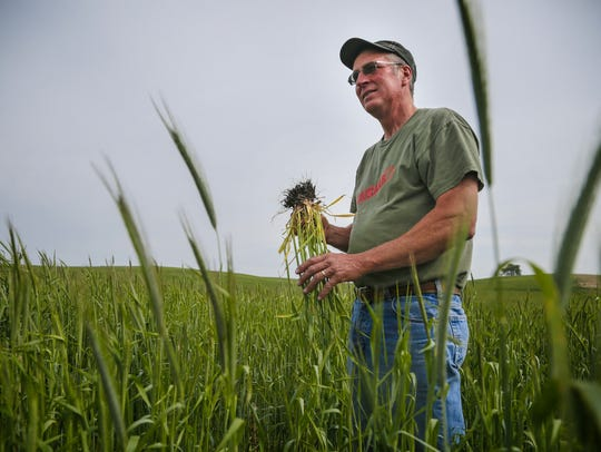 Farmer John Boettcher stands in a field of cereal rye
