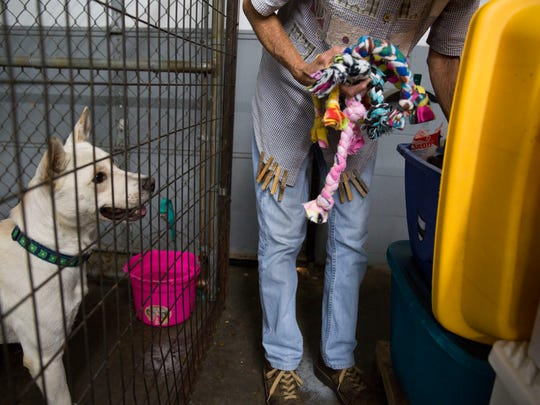 One of the dogs at New Hope Animal Rescue in Henderson, Ky., waits patiently for a new toy on Monday afternoon.