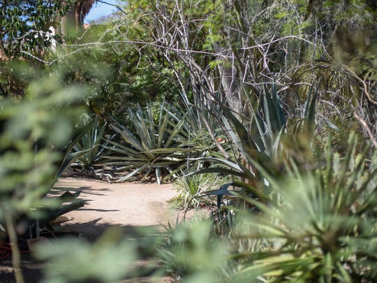 """Moorten Botanical Garden in Palm Springs on Tuesday, September 13, 2016. The garden is on Lydia Kremer's book """"100 Things to Do in Palm Springs Before You Die."""""""