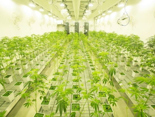 Canndescent, a newly-opened marijuana production plant