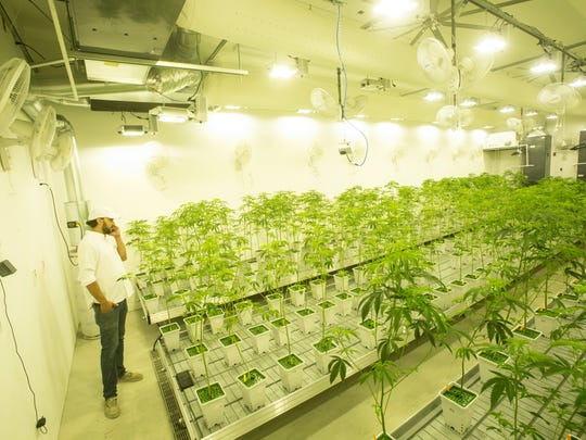 Canndescent, a marijuana production plant in Desert