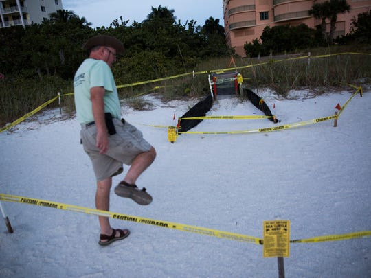 Martin Roddy, a volunteer sea turtle monitor, steps over a marked off area to check if the turtles have hatched on Monday, Oct. 31, 2016, at South Beach on Marco Island.  Midnight marks the end of turtle nesting season. As it begins to get darker earlier, lights from surrounding condos disorient the hatchlings.