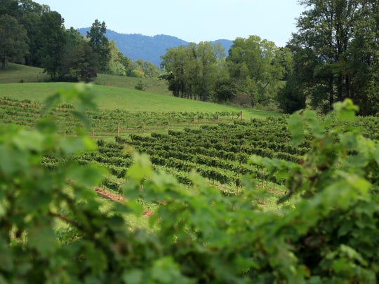 The Leicester home and vineyard of Jeff and Diane Frisbee.