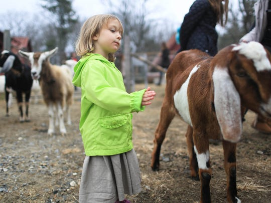 A young visitor greets one of the goats at the Carl Sandburg Home Goat Barn. Although the goats are a popular attraction, most people come to the National Park Site in Flat Rock to go hiking. Asheville Citizen Times photo