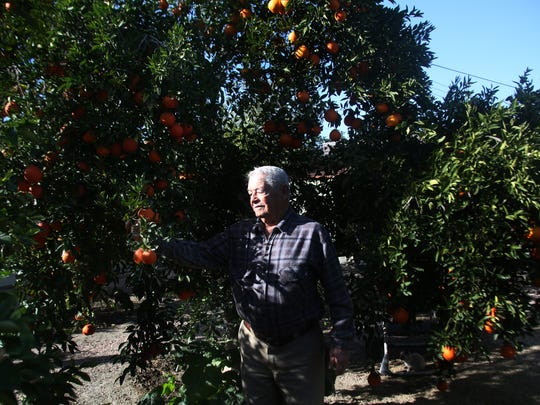 Jose Valadez, 81, walks in his garden at his home in Coachella. He came to the U.S. as part of the Bracero farm labor program in 1955, worked for decades as a foreman, and bought a house and raised his family in Coachella.