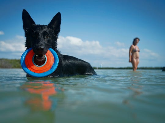 A black German Shepherd fetches at the Bonita Beach Dog Park. Dog lovers and their companions can hit the water to enjoy sunny skies.
