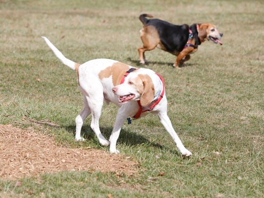 A pair of dogs, Chloe and Dillon play at the new Stony