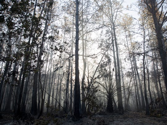 Smoke and charred remnants are all that remains along Benfield Road early Thursday, March 9, 2017 in East Naples. A brush fire that started Sunday afternoon in the Picayune Strand Forest has swept through the area burning around 7,500 acres total in eastern Collier County.