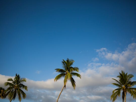 Clouds sit in the sky above the palm trees on Tuesday,