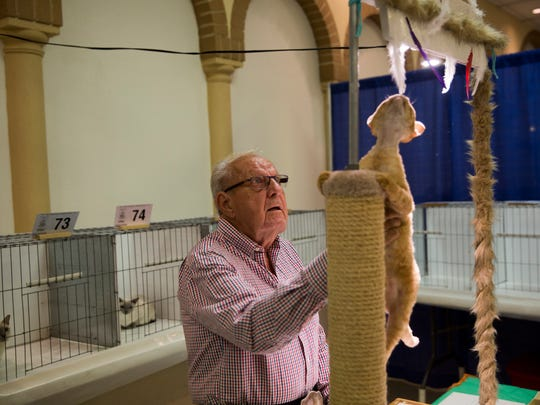 Judge Don Williams inspects a cat as it gets distracted by a dangling feather at the 2017 CFA Allbreed Cat Show.