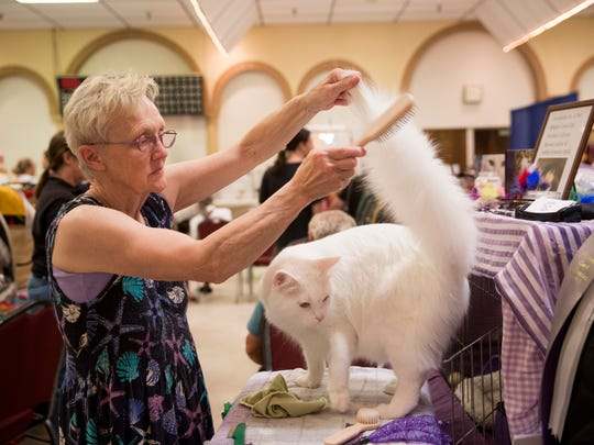 Janet Marr, of Rising Sun, Indiana, combs her Maine Coon, Tuscany, prior to showing him at the CFA Allbreed Championship & Household Pet Cat Show at Araba Shrine Temple Saturday July, 8, 2017 in Fort Myers.