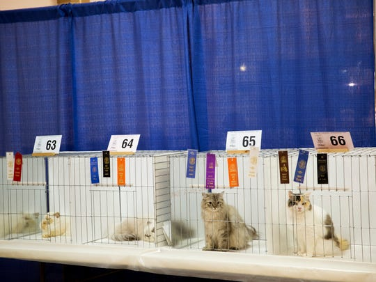 Felines and their human counterparts from around the country showed out for the 2017 CFA Allbreed Cat Show.