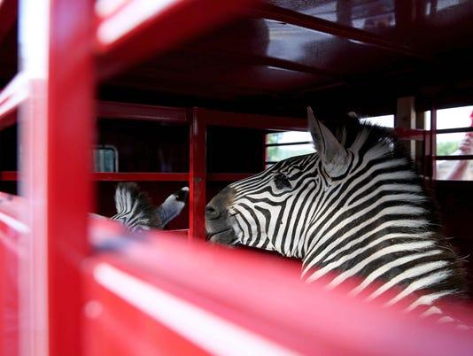 zebra-30.jpg
