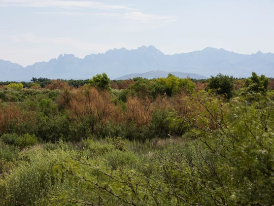 The Organ Mountains can be seen from the Upland Trail