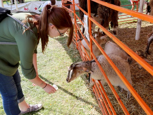 A fair-goer feeds a goat during the Manitowoc County Fair in 2016.