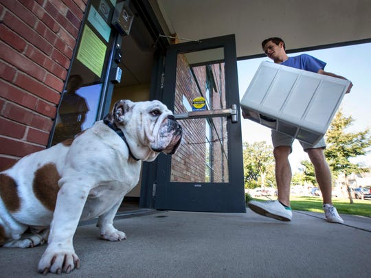 Drake University mascot Griff stands guard outside Carpenter Hall as students move into the dorms at Drake University in Des Moines, Iowa, Wednesday, Aug. 23, 2017.