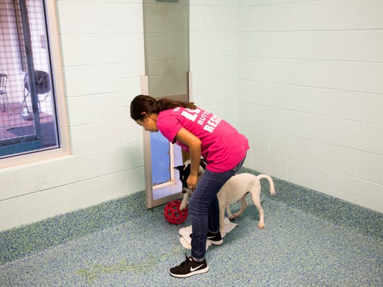 Due to overcrowding in shelters across the island territory of Puerto Rico 27 dogs were flown to Fort Lauderdale International Airport and then transported to the Humane Society of Naples to be put up for adoption Wednesday, August 23, 2017.
