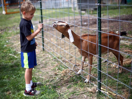 In a Saturday, Sept. 2, 2017 photo, Darren Eaton, 6, of Holland, feeds a goat during a tour of Glass City Goat Gals, which is part of the Ohio Sustainable Farm Tour and Workshop Series in Toledo, Ohio.Glass City Goat Gals owner Liz Harris has spent seven years transforming an area that once consisted of 15 abandoned homes — before the Lucas County Land Bank tore them down — into an urban farm on Mentor Drive promoting wellness, healthy eating, and environmental sustainability.