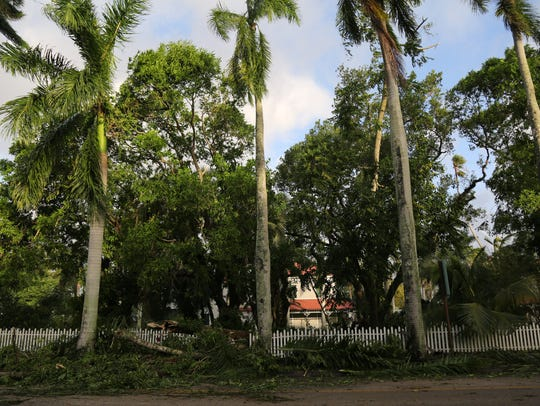 Downed trees and debris at the Edison & Ford Winter