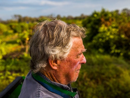 "Martin Mason, 75, examines his citrus trees on his farm in Fort Denaud on Friday, Sept. 29, 2017. Many of his crops were severely damaged by Hurricane Irma. Mason is an experienced citrus grower who bought this farm in 2011. ""This was the year I was about to break even, and now I'm back at square one,"" he says."