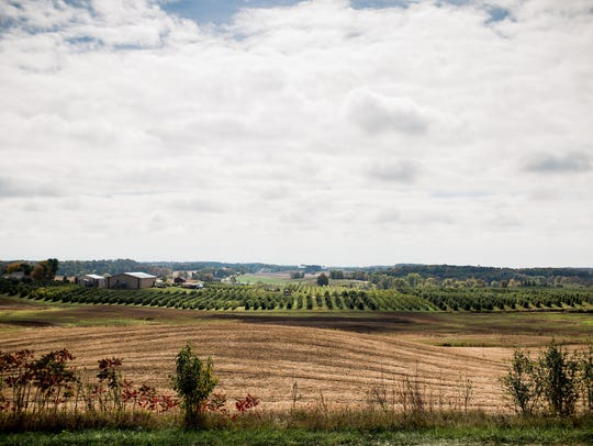 Rows of apple trees are seen at Schweitzer Orchards