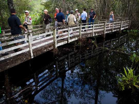 Members of Leadership Florida walk along the boardwalk during a tour at the Corkscrew Swamp Sanctuary in Naples on Thursday, November 16, 2017. Roughly 60 leaders from Leadership FloridaÕs Cornerstone XXXIV class will visited AudubonÕs Corkscrew Swamp Sanctuary as part of the organizationÕs 10-month educational program of five, two and three-day sessions held in cities through the state.