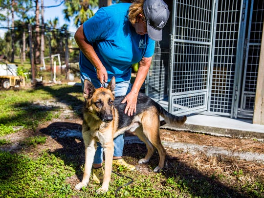 Bonnie Moore with her foster dog Mango at Big Cypress German Shepherd Rescue in Golden Gate Estates on Tuesday, Nov. 21, 2017. Mango was rescued from Miami and has been with Moore for a month.