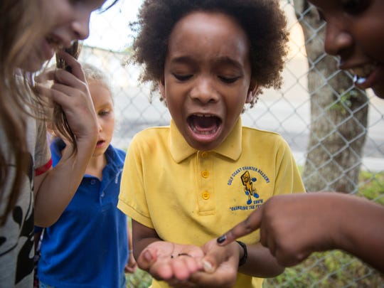 Jeremiah Baptiste was not pleased when he realized the worm he was holding had just excreted on him while his teacher, Nadiah Yusuf, and classmates worked together to maintain the raised garden beds around Gulf Coast Charter Academy South on Wednesday, Nov. 29, 2017.
