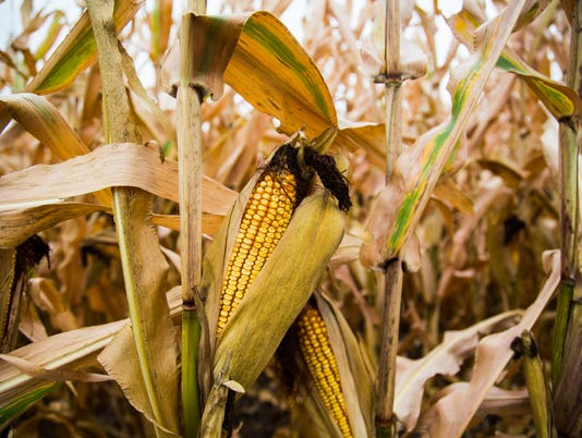 636480731136835350-Corn-Farmer-Suicide-AMulkern.jpg