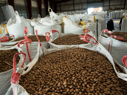 Pecans are stored in large containers in the San Saba Pecan plant. A press conference was held Wednesday, Dec. 20, 2017, at San Saba Pecan where the quarantine of pecans coming into New Mexico along with thefts of pecans in the county was discussed.